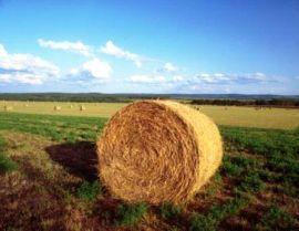 Contributi A Fondo Perduto Imprese Agricole